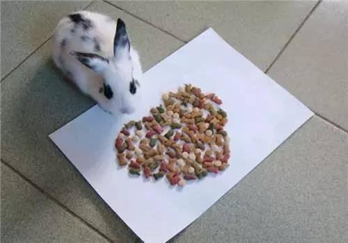 兔子可以只吃兔粮不吃草吗?