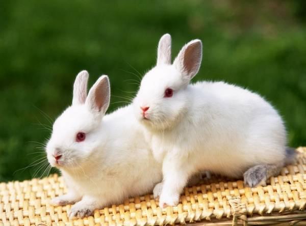 兔子不吃东西