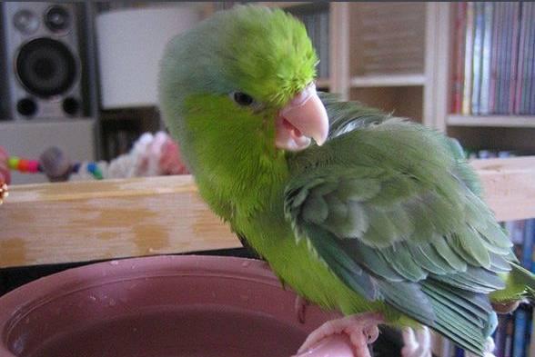 关于鹦鹉怎么养,鹦鹉种类、训练、转卖