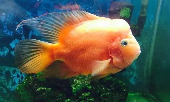 鹦鹉鱼15.jpg