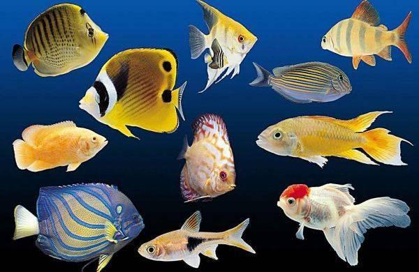 热带鱼水温多少合适