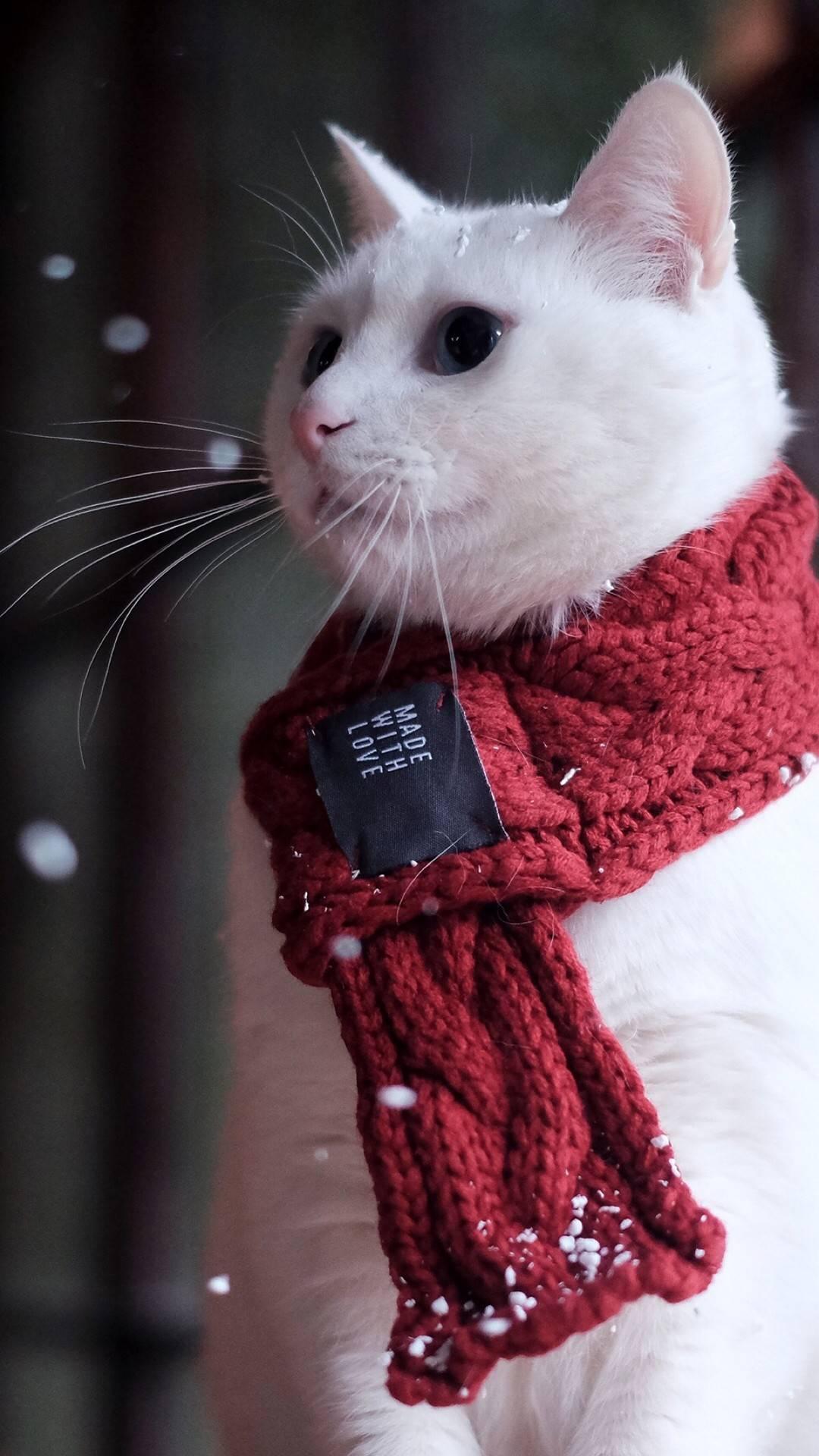天冷了大家注意保暖