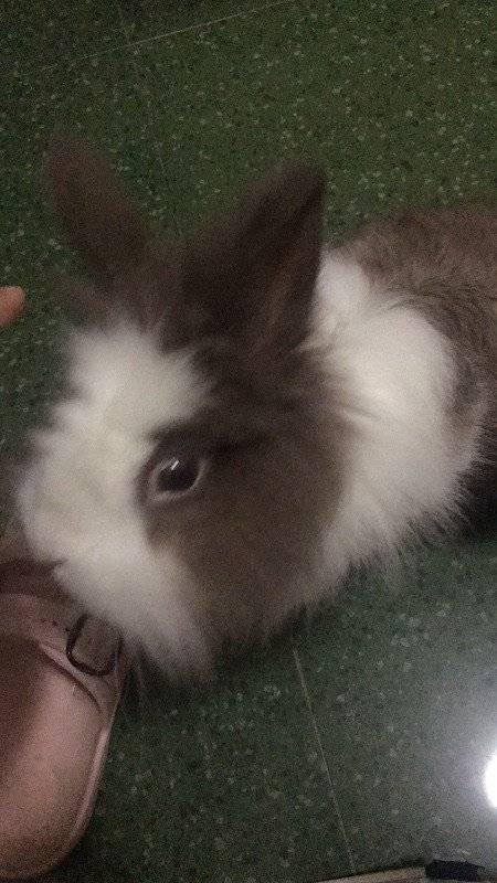 最近兔兔总咬人,喂食咬,捡屎也咬,有时还会蹿出来吓人