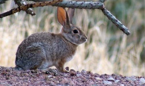 兔子真的喜欢吃胡萝卜吗
