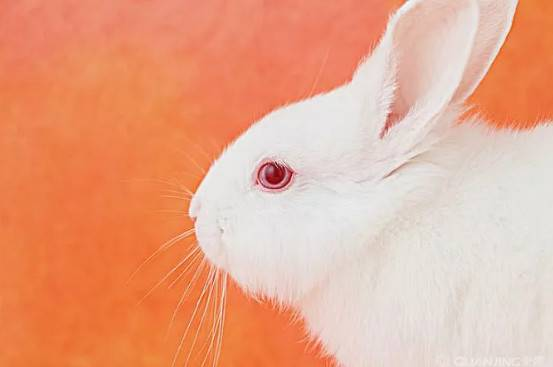 兔子不愿意用铝板,这个夏天怎么办!