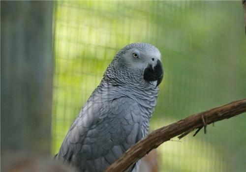 鹦鹉这些地方,连人类都无法超越,真是神奇的生物啊!