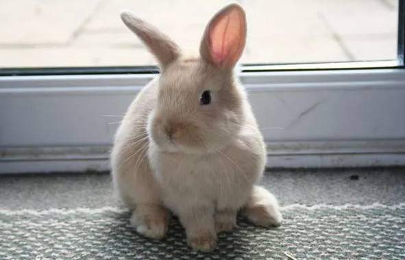 兔子护食咬人怎么办?