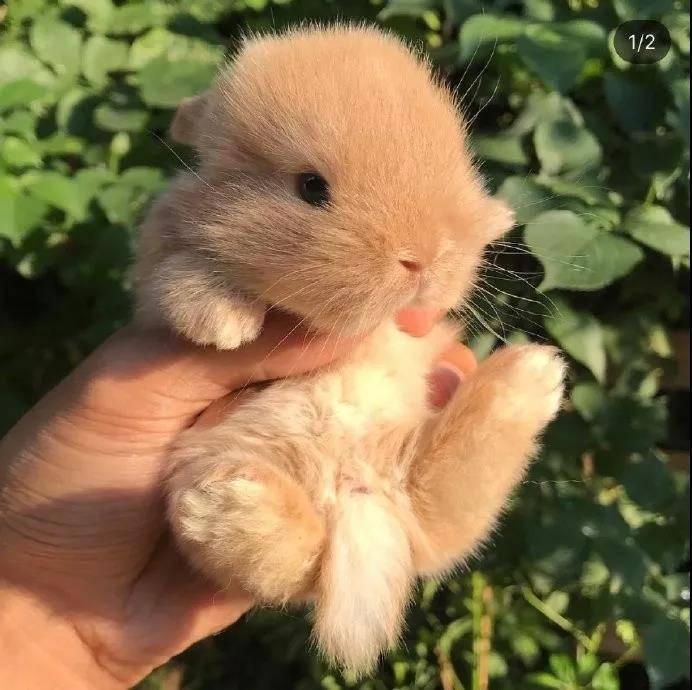 小奶兔,太阔爱啦~