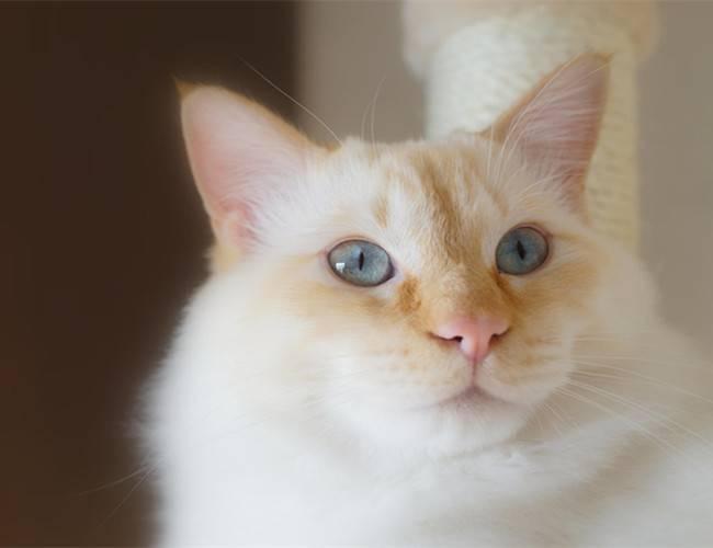 猫咪可以吃雪糕吗