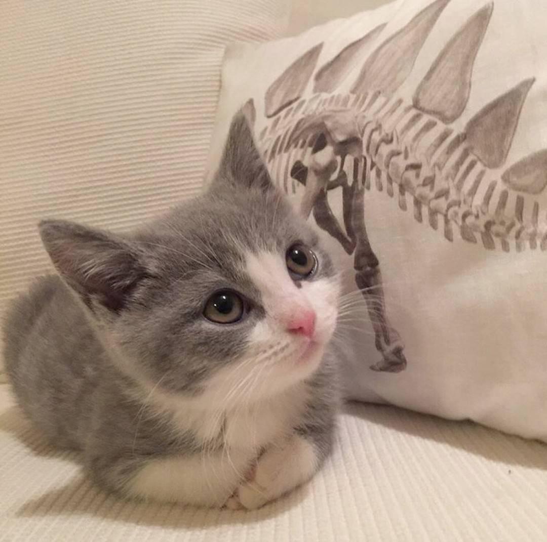 萌宠 猫咪 喵星人