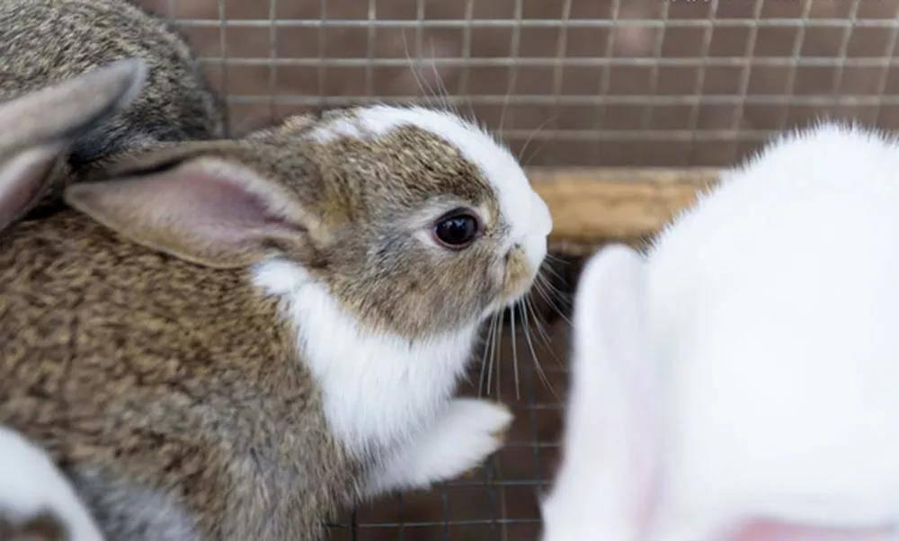 兔子害怕炒菜的声音怎么办?