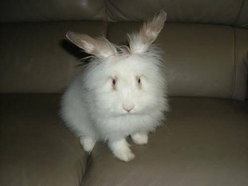 兔子怎么养,健康的兔兔怎么吃?