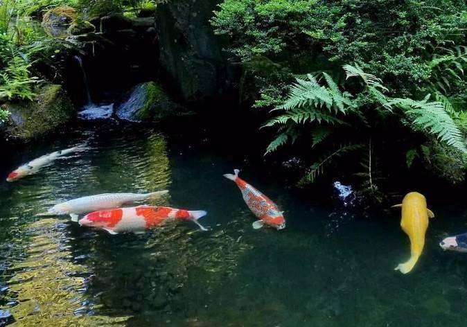 如何预防水质变化引起的肠炎