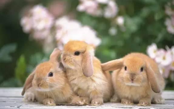 兔子不想养了能放生吗?把兔子放生,你是想害死它吗?