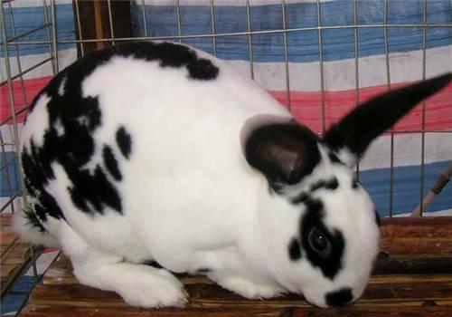 冬季如何做好兔兔的保暖工作