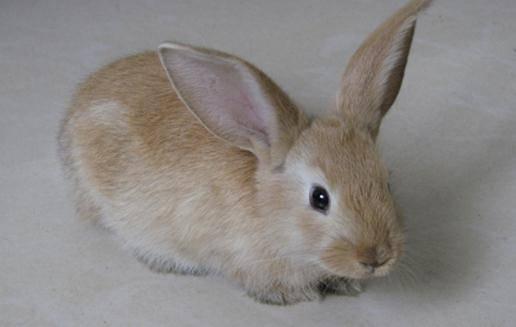家里装空调吓死了兔子