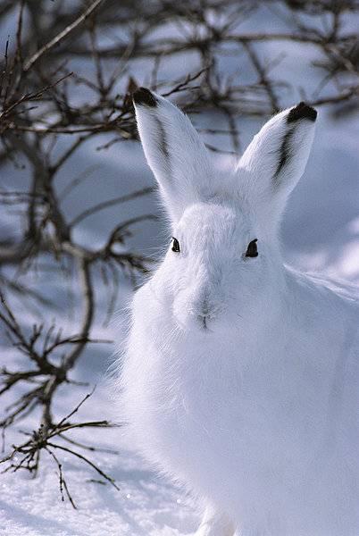 萌物系列北极兔兔宝宝,太喜欢了,就是没有机会养