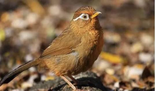 通过哪些方面,一眼分辨画眉鸟饲料的优劣?