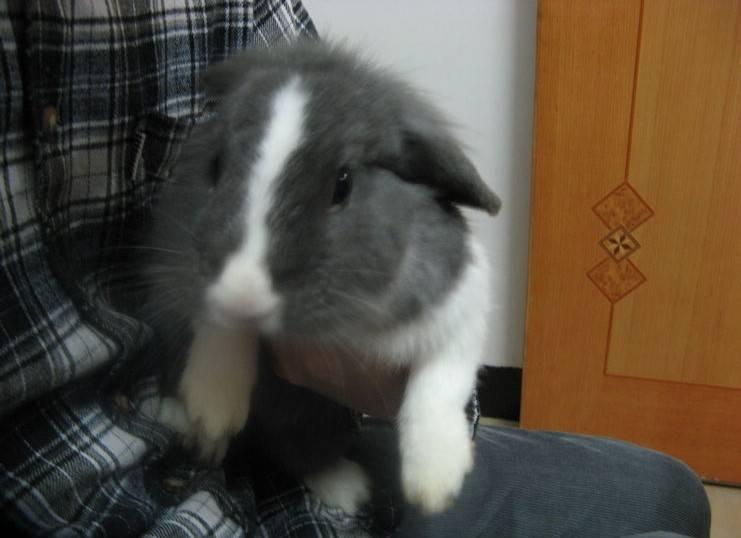 幼兔吃什么,幼兔一天喂几次,看到它期待的小眼神,我差点忍不住给它加粮了