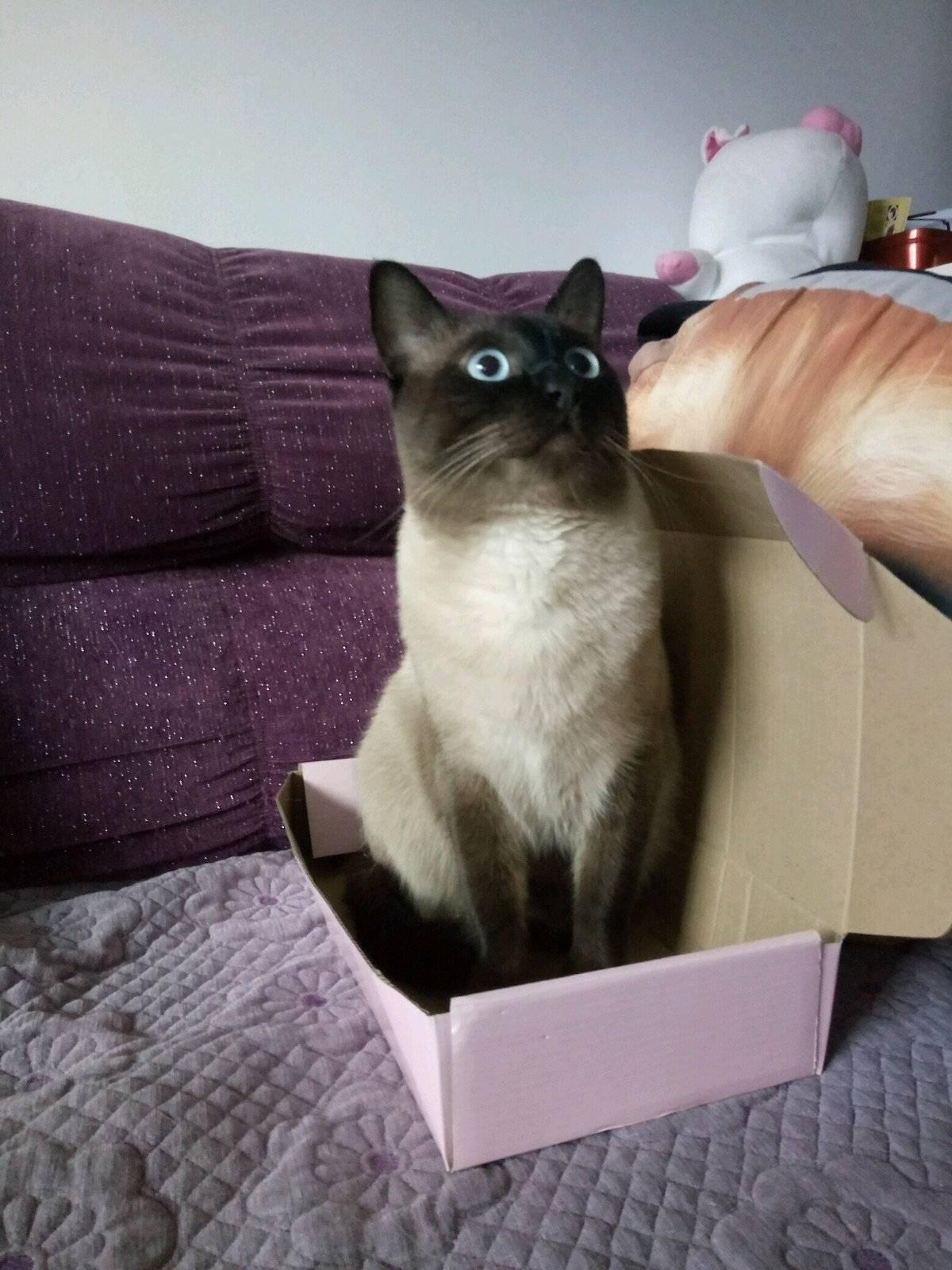 盒子盒子我的最爱