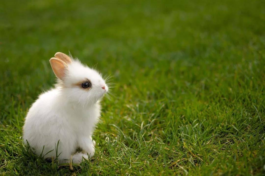 科学喂养,警惕幼兔低血糖