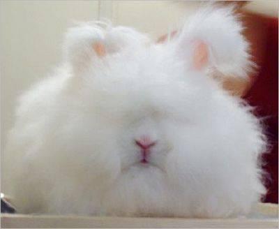 兔兔为什么会突然压低身子?