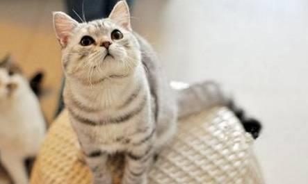 猫咪生病的症状