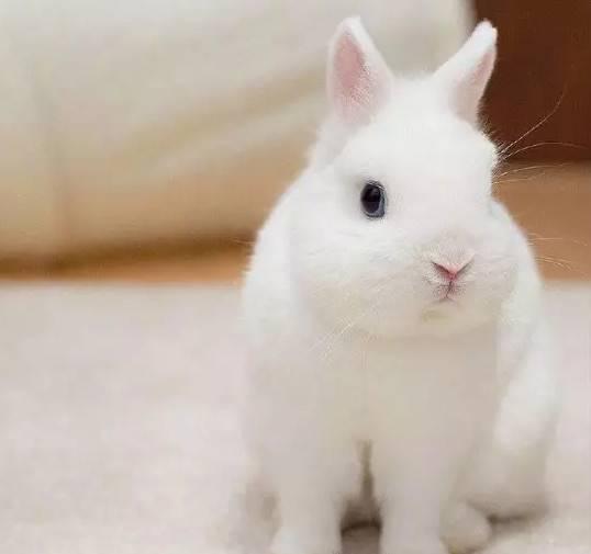 兔子为什么拔自己的毛?