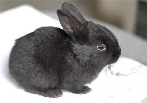 天气炎热兔子不肯吃草了?