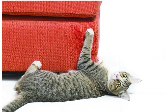 猫咪抓沙发怎么办,猫为什么要磨爪比大家介绍几种磨爪利器