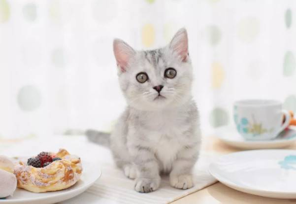 猫咪健康二三问