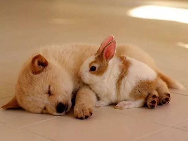 兔子可以和狗一起养吗