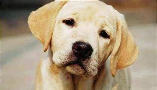 宠物狗狗老化了,你愿意陪照顾高龄老狗走到最后吗?