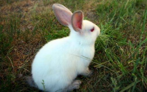兔粮和草可以同时放在笼子里吗?