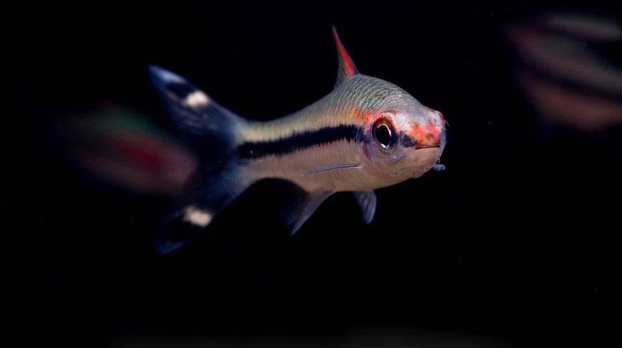 养鱼路上很多坑,各种死鱼你经历过哪几种?