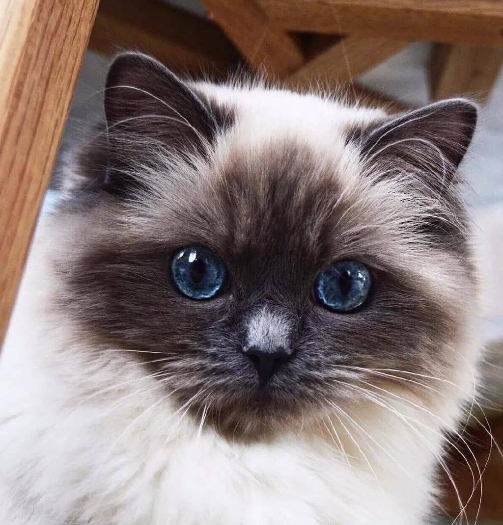 超萌的猫咪,眼里有星辰大海