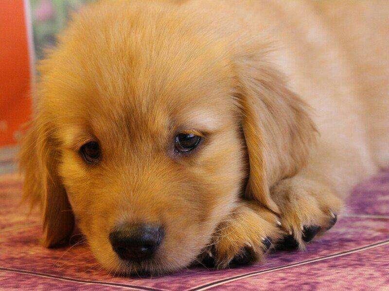 狗狗未满1岁,有几个问题要注意,早知道早教育