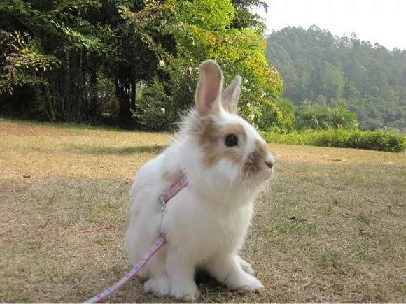 带兔兔出门遛弯注意事项