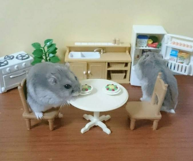仓鼠繁殖生育时,主人要避免哪些误区?