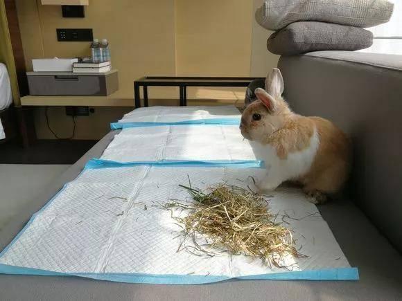 携兔子自驾游旅行,需要带什么东西要注意些什么