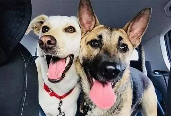 为什么大家都养两只狗?看完这些好处,应该给爱犬添个伴