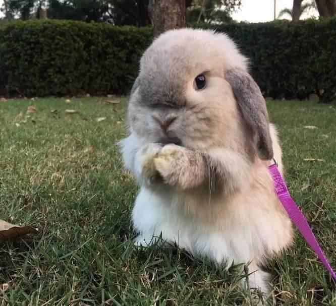 兔子身上会不会有跳蚤?
