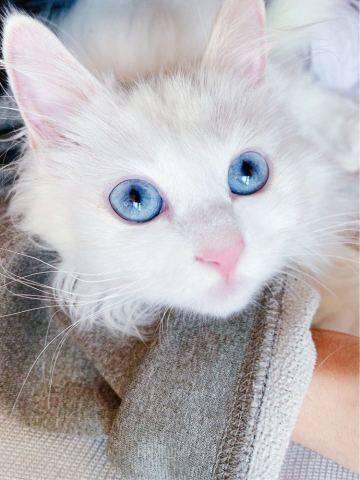 我们家胖九的小蓝眼