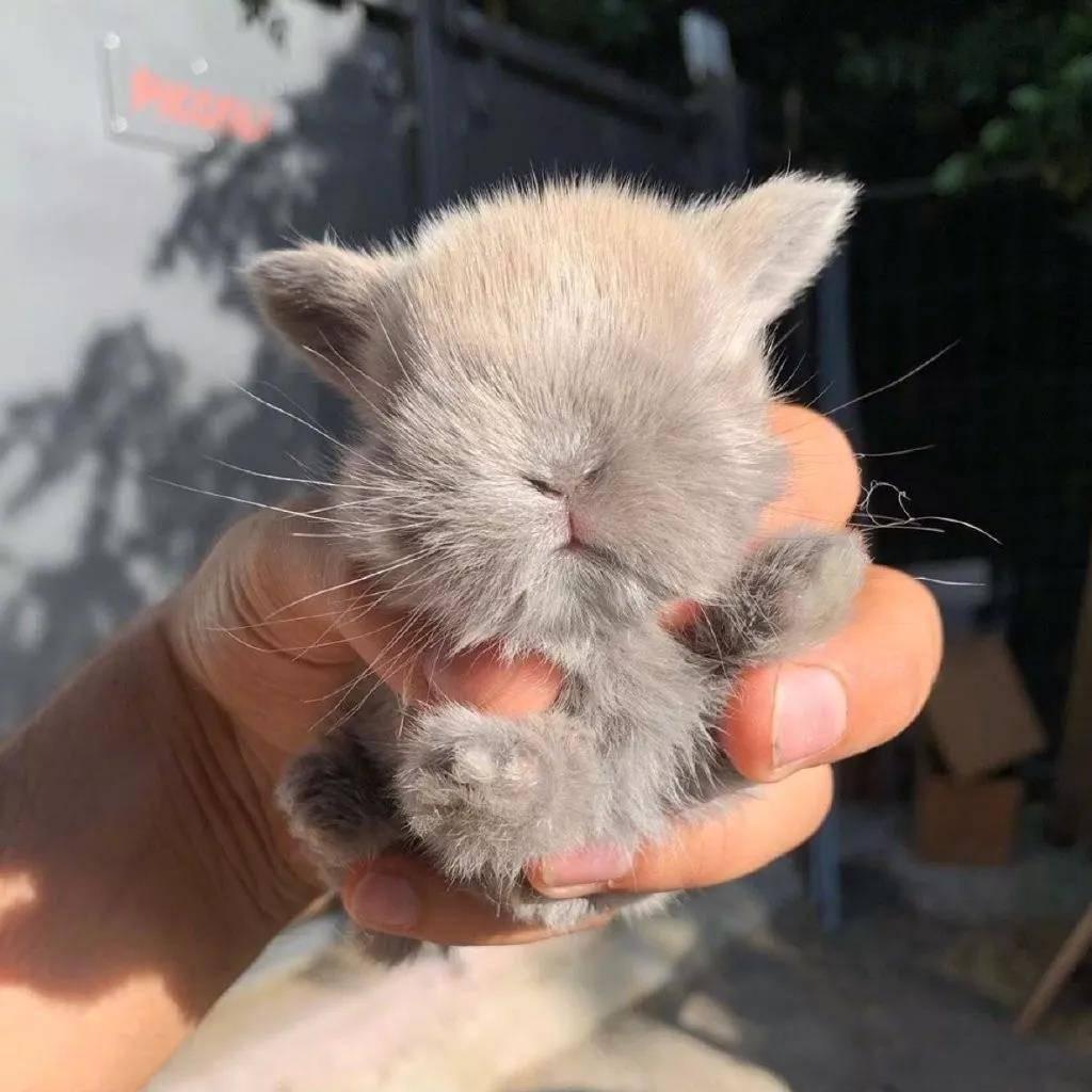 小兔子虽然很萌,但注意抱小兔子姿势!