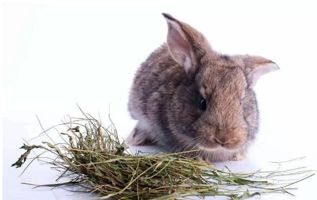 兔子磨牙用什么