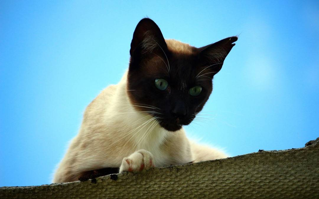 猫容易得什么病