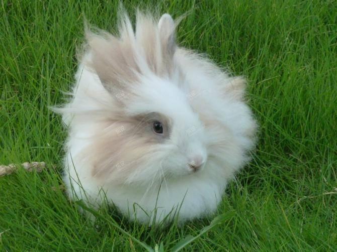 兔子不拉屎怎么办