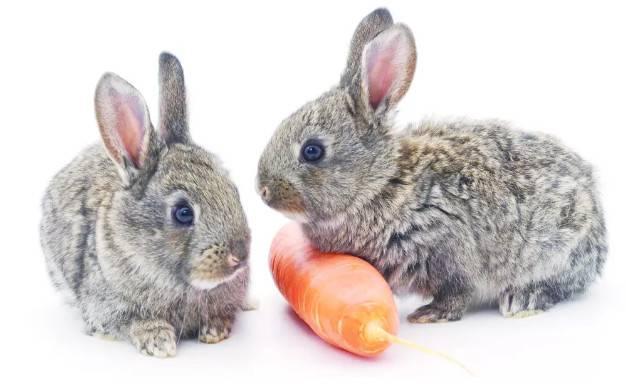 小兔子怎么养,饮食决定寿命长短,萌小白应该怎么吃?