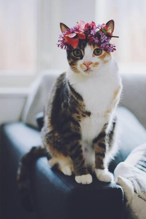 幸福是一只温暖的小猫咪~