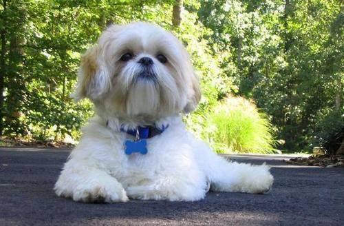 狗狗贫血怎么办,狗狗贫血有什么症状,狗狗贫血不能不防。